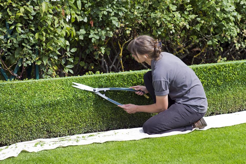 jak dbać o topiary (4)