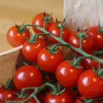 Balkonowa uprawa pomidorów