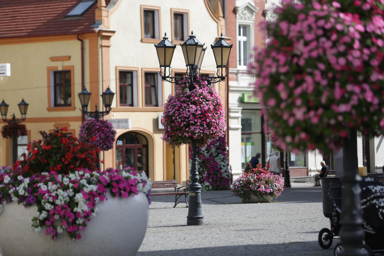 wiszące wieże kwiatowe terra