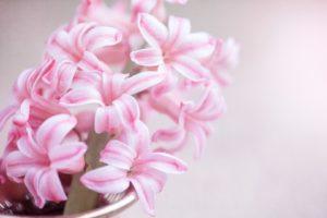 Wiosenne inspiracje: hiacynt