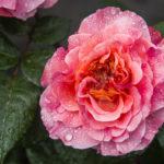 Najładniejsze kwiaty doniczkowe dla Twojegodomu