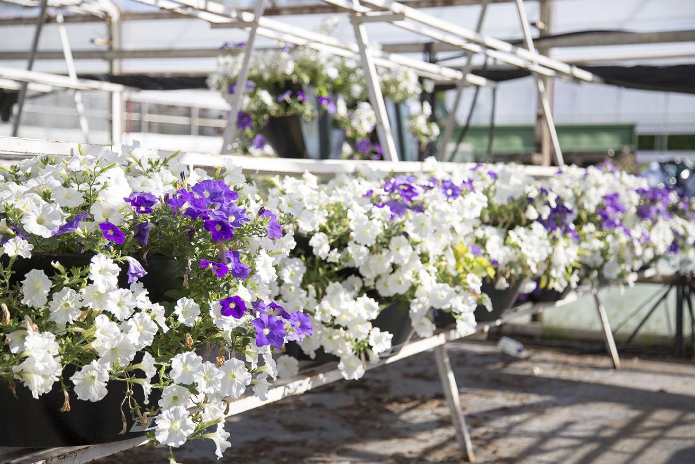 Kwiatowy eksperyment w Blachowni