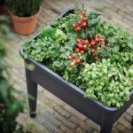Jak stworzyć warzywnik nabalkonie?