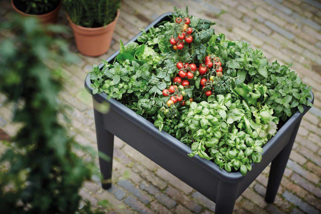 Jak Stworzyć Warzywnik Na Balkonie Inspirowani Naturą