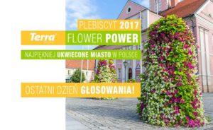 Plebiscyt Terra Flower Power 2017 - kto wygra?