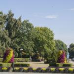 Władysławowo wmorzu kwiatów