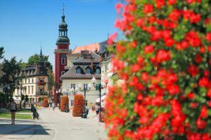 wieże kwiatowe terra cieplice ukwiecenie (5)