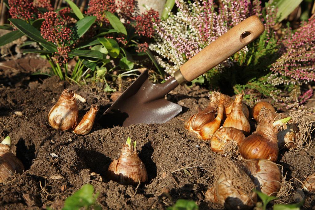 Co sadzimy we wrześniu w ogrodzie?