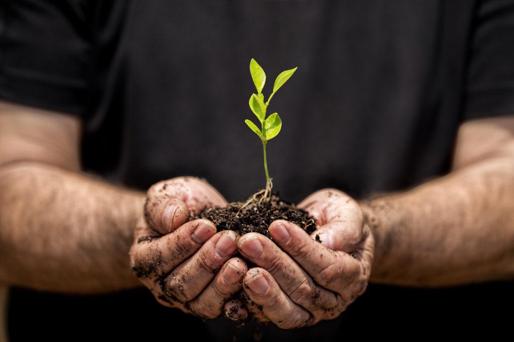 Rośliny – nasi sprzymierzeńcy