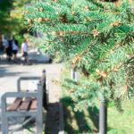 Iglaki wprzestrzeni publicznej – jak oniedbać?