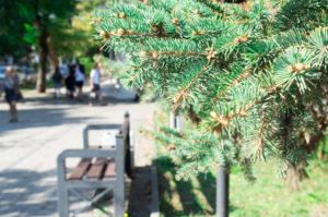 Iglaki w przestrzeni publicznej – jak o nie dbać?