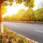 """""""Stres miejski"""" im niegroźny – drzewa liściaste przestrzeni publicznej"""