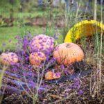 Chryzantema, dynia idużo kolorów – Września gotowa najesień!