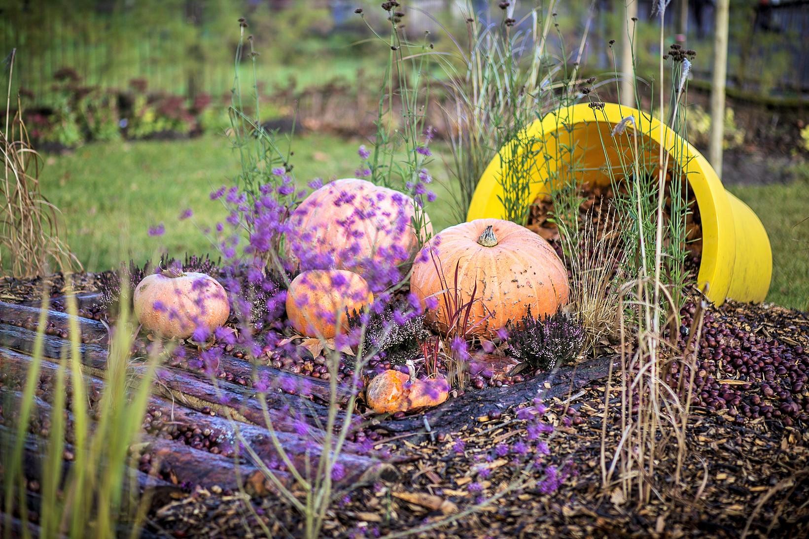 Chryzantema, dynia i dużo kolorów – Września gotowa na jesień!