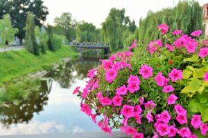 wieże kwiatowe skrzynie kwiatowe terra group pułtusk
