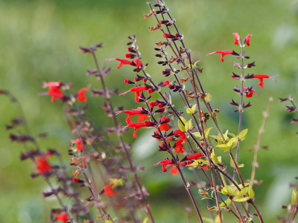 piątka ogrodowa inspirowani naturą (1)
