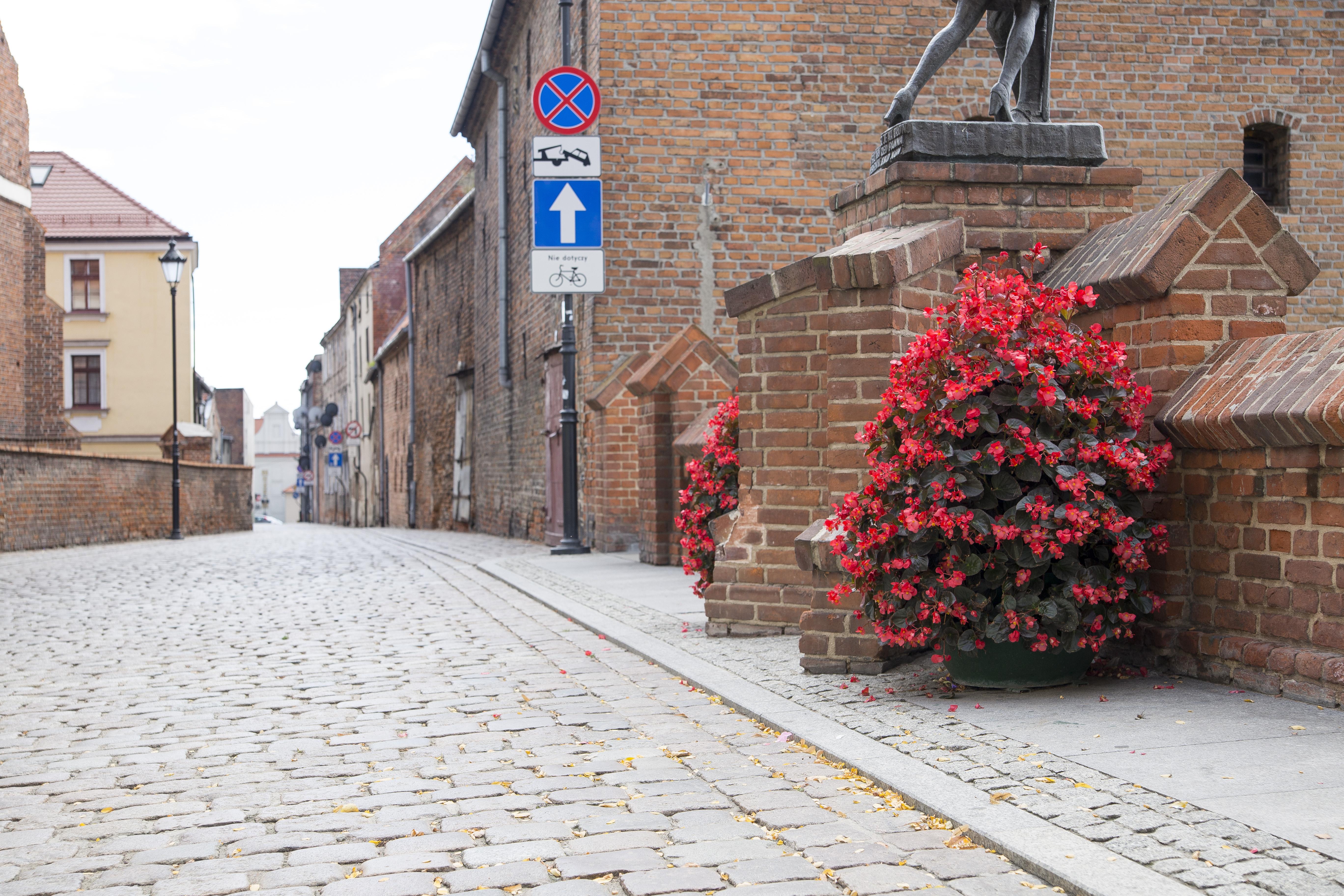 wieże kwiatowe kwietniki miejskie terra piątka ogrodowa Szczawno H1200 Grudziadz Begonie