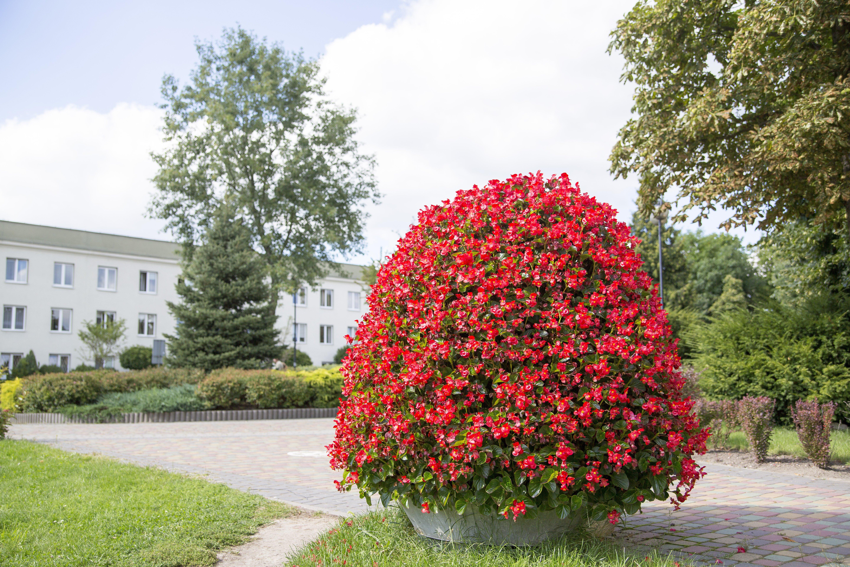 wieże kwiatowe kwietniki miejskie terra piątka ogrodowa Skarżysko H1200 Park Begonia