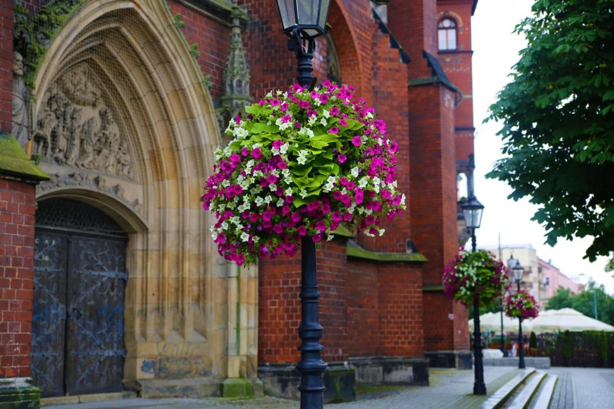 wieże kwiatowe ukwiecenie legnicy
