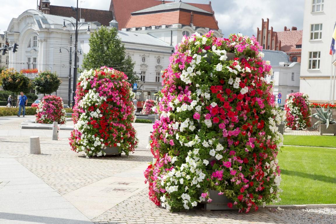 Toruń H2000 Rynek Surfinie wieże kwiatowe terra