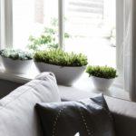 5 roślin doniczkowych dobrze znoszących suche powietrze wmieszkaniu