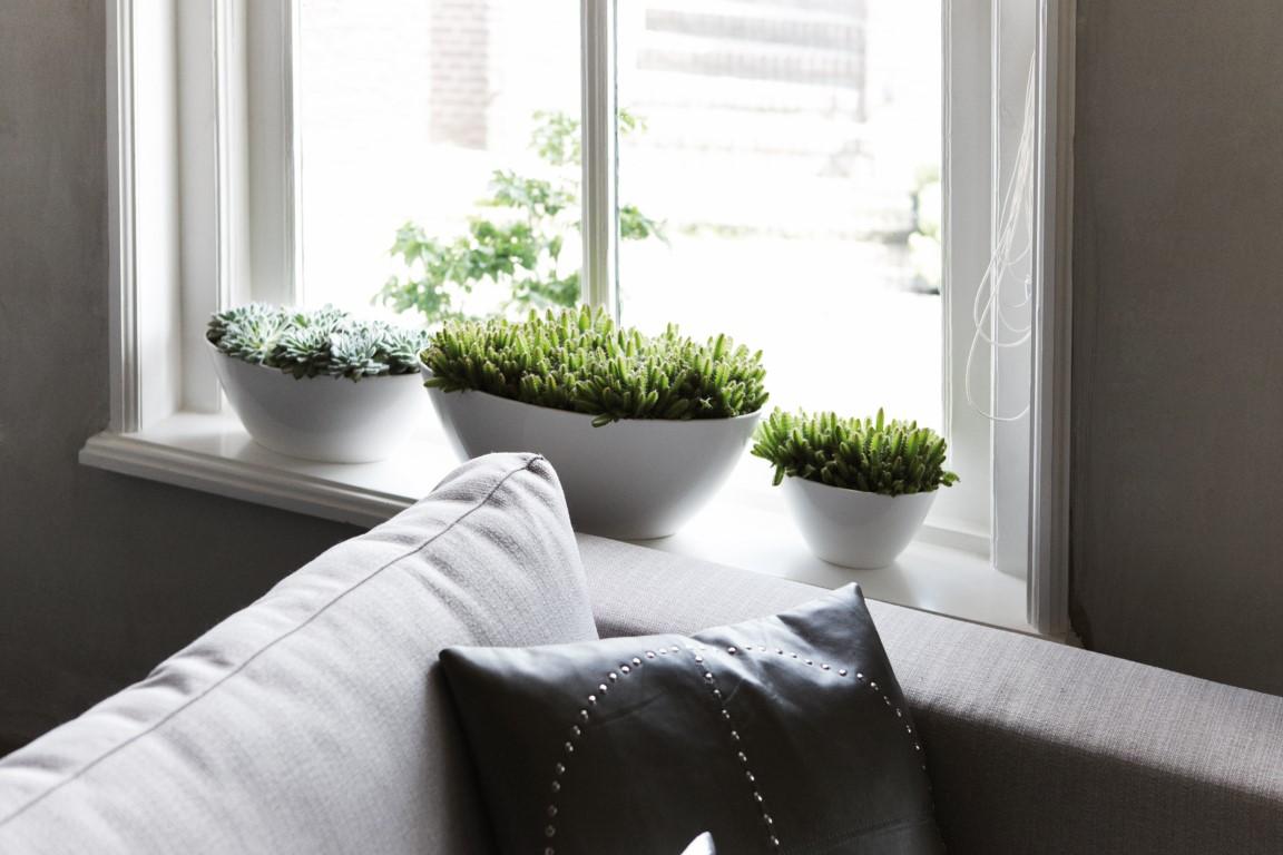 5 roślin doniczkowych dobrze znoszących suche powietrze w mieszkaniu