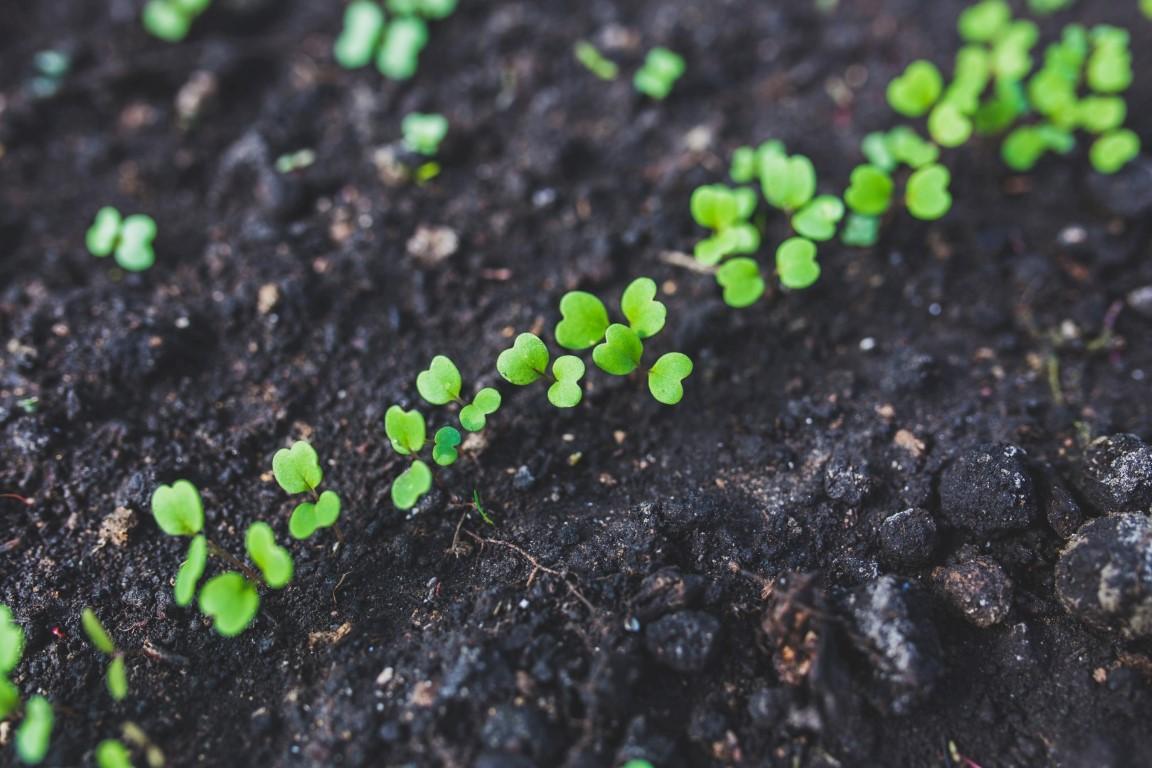 co siać w marcu zielnik warzywnik