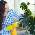 Jak usunąć kurz zroślin doniczkowych?