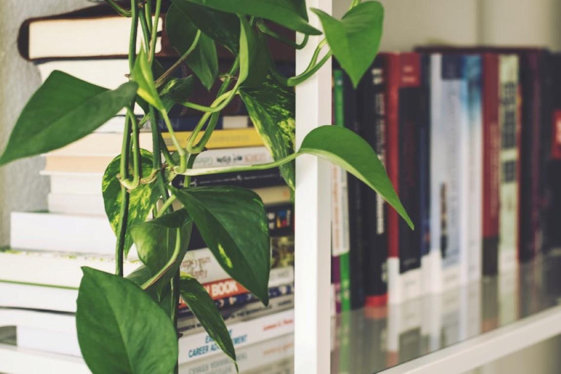 jak-usunać-kurz-z-roślin-doniczkowych