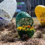 Bratki, stokrotki ikilka pisanek – wiosna wZielonej Górze