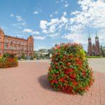Czego potrzebują miejskie rośliny?