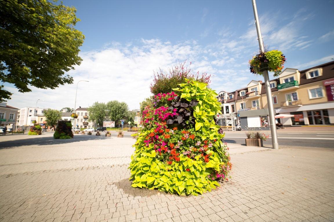 wieże kwiatowe terra ukwiecenie miasta kwietniki (3) Grodzisk Mazowiecki