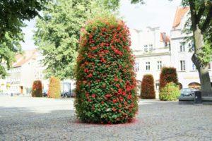 wieże kwiatowe terra ukwiecenie miasta kwietniki (4) Kamienna Góra