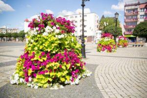 wieże kwiatowe terra ukwiecenie miasta kwietniki (5) Gorzów Wielkopolski