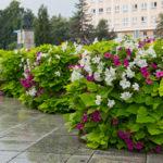 Jak pielęgnować rośliny wwieżach kwiatowych?