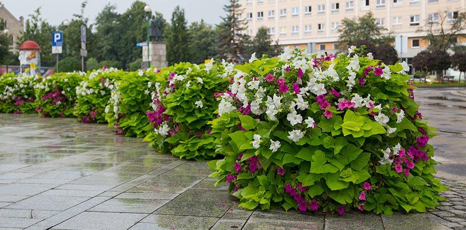 Jak pielęgnować rośliny w wieżach kwiatowych?