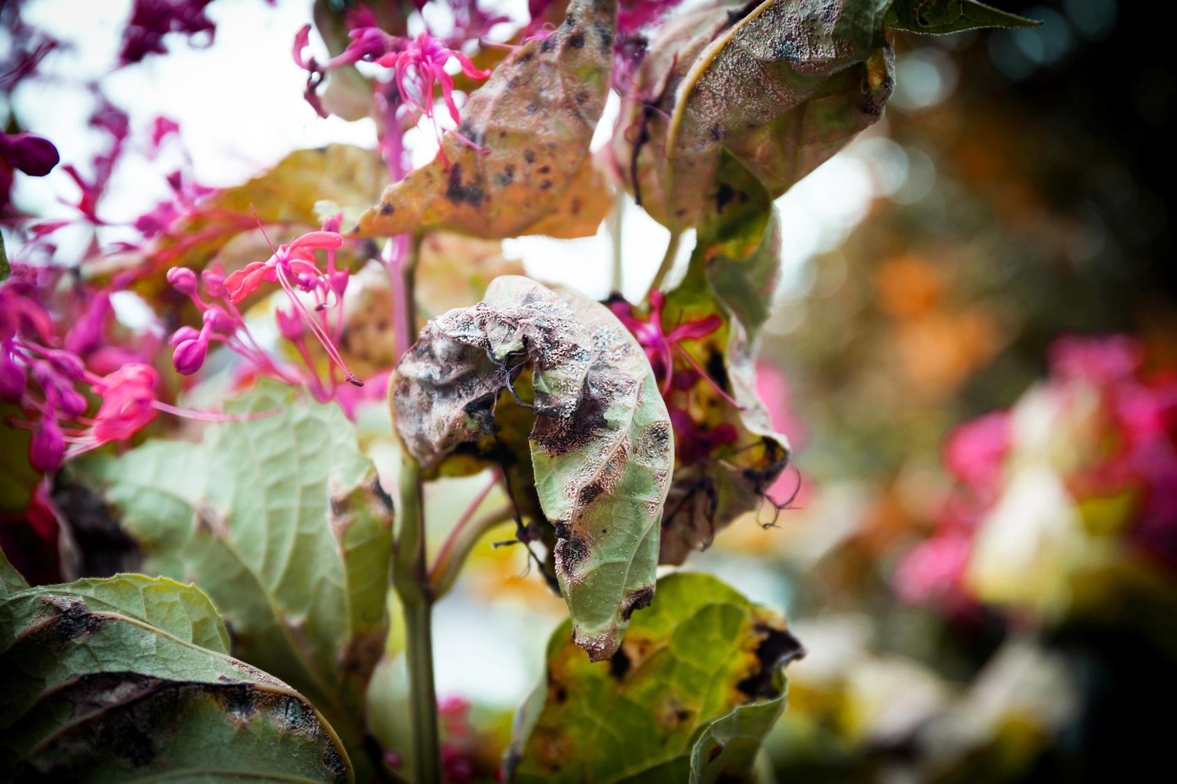 Jak pielęgnować rośliny wwieżach kwiatowych