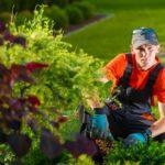 Rośliny dla miejskich nasadzeń