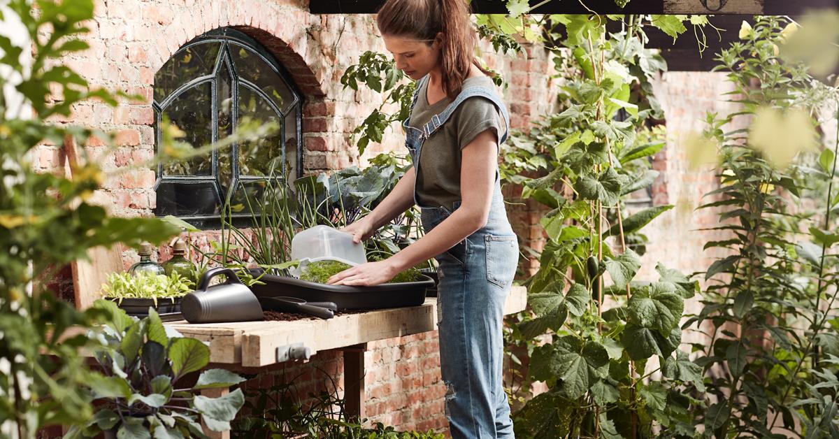 Uprawa warzyw w domu – co wysiać w marcu?
