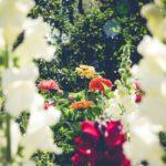 Zielona terapia – bezkolejek iskutków ubocznych