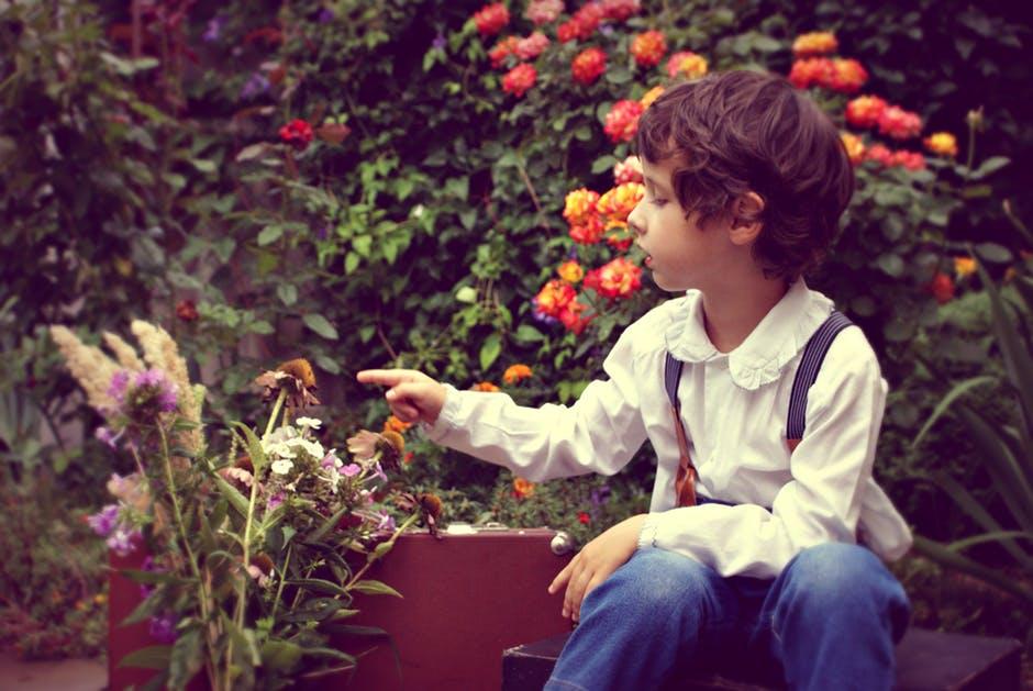 zielona terapia horiterapia zieleń miejska kwietniki (1)