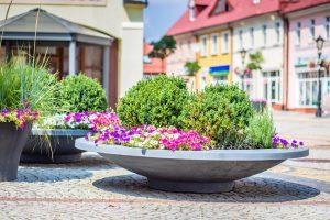 Krzewy w donicach miejskich – wybierz, posadź i zadbaj!