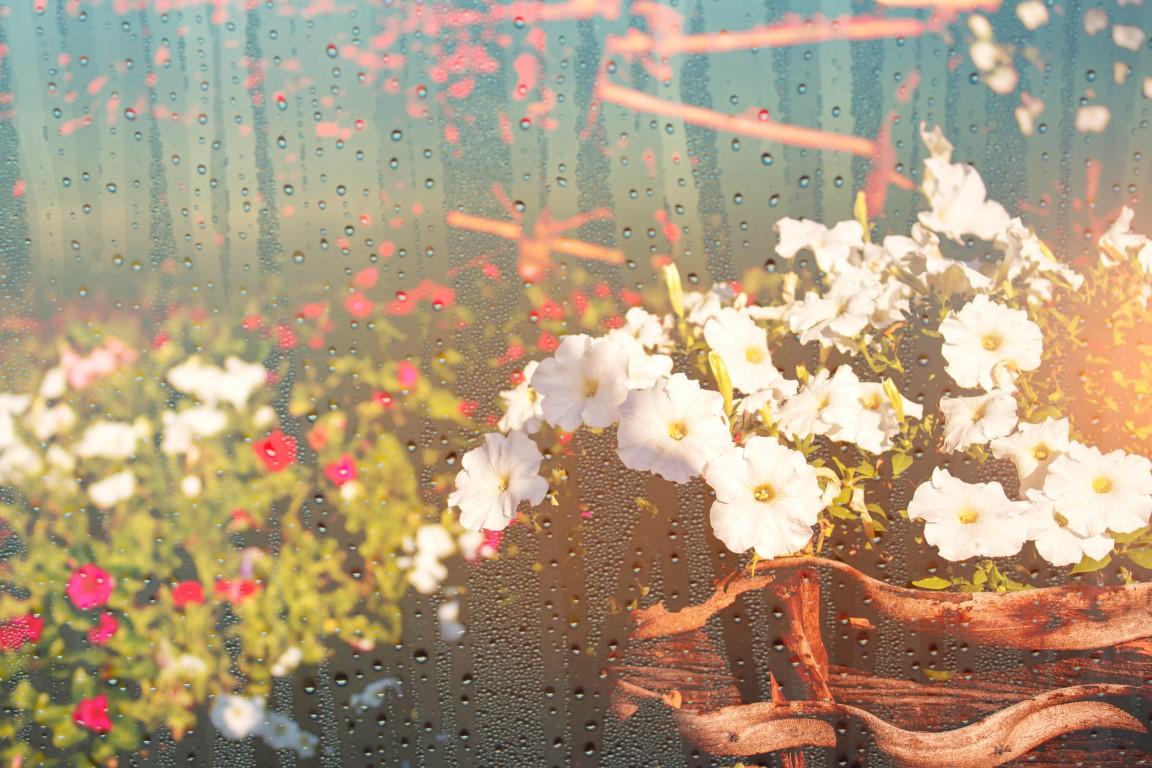 Jak gorąco! Nawodnij rośliny latem hydrogel zieleń miejska