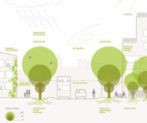 jak sadzić drzewa w mieście