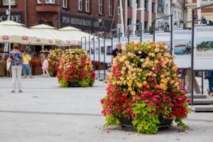 wieże kwiatowe ukwiecenie miasta świnoujście 1