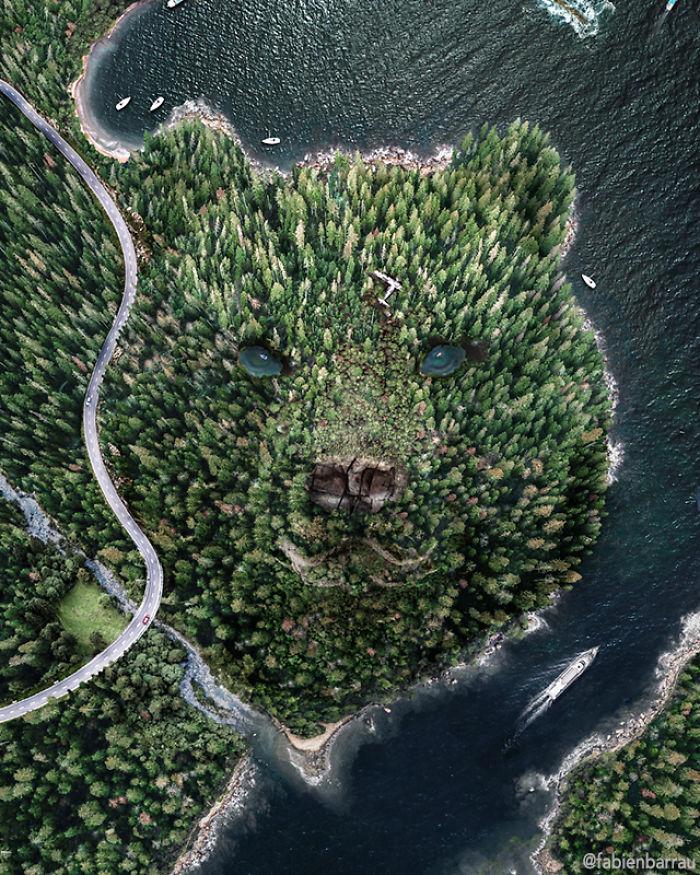 Twarzą w twarz z lasem