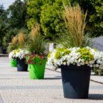 Nekla wkwiatach… antracycie ilimonce