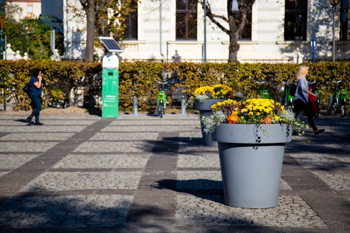 jesienne donice kwiatowe ukwiecenie miasta jesienią donice na jesień 2