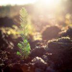 Jesienią… lasy się zielenią!