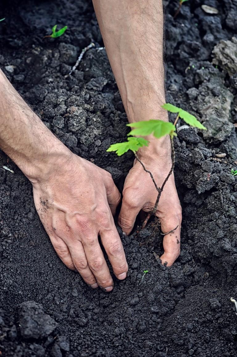 hydrogel terra jesienne odnawianie lasów